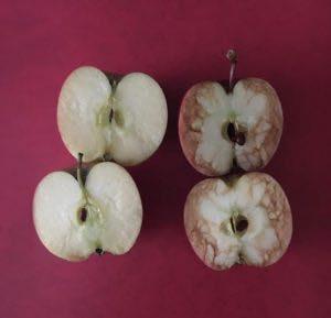 De gepeste appel..